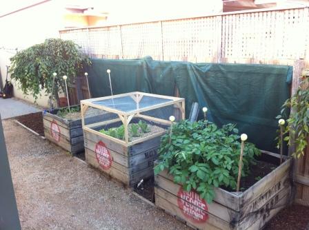 My first three veggie crates