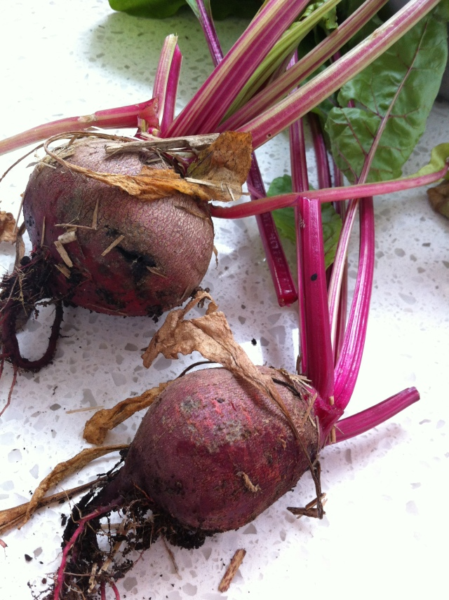 Our first beetroot harvest. Made beetroot and feta dip.
