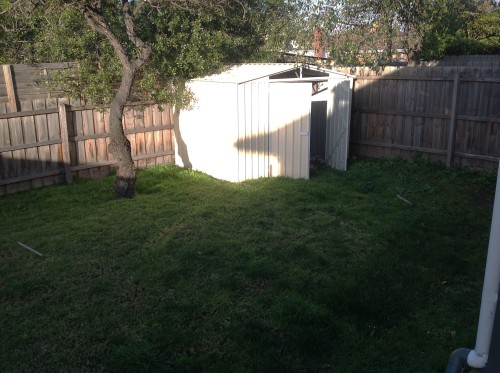The ugly shed in the back corner and the dying almond tree