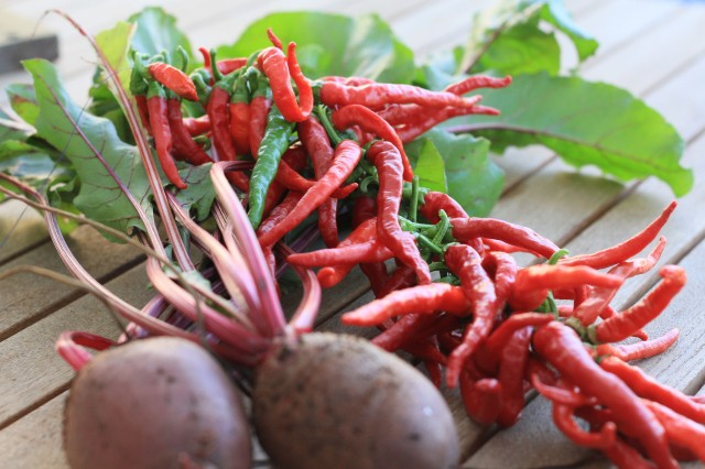 Instant satisfaction - Beetroot and chilli harvest
