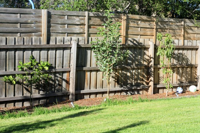 Orange, apple and nectarine trees in this photo. Also have cherry, lemon, mandarin and olive.