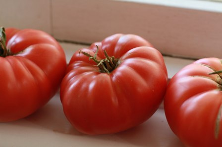 Juicy ripe big beefy tomatoes grown from seed
